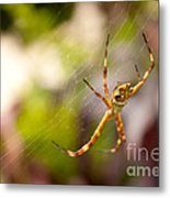 Red Invisible / Invisible Web  Metal Print