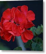 Red Is My Blossom Metal Print