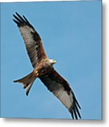 Red Kite In Flight Metal Print