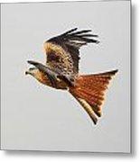 Red Kite Soaring Metal Print