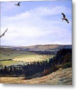 Red Kites At Coombe Hill Metal Print