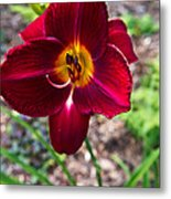 Red Lady Lily 1 Metal Print