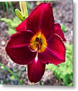 Red Lady Lily 2 Metal Print