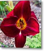 Red Lady Lily 4 Metal Print