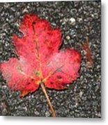 Red Leaf On Pavement Metal Print