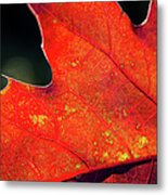 Red Leaf Rising Metal Print