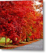 Red Leaf Road Metal Print