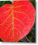 Red Leaf With Yellow Veins Metal Print
