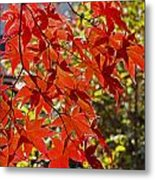 Red Leaves 1 Metal Print