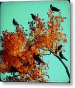 Red Leaves Among The Ravens Metal Print