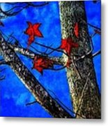 Red Leaves Blue Sky In Autumn Metal Print