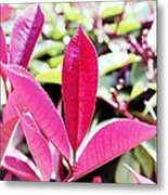 Red Leaves Metal Print