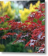 Red  And  Yellow  Leaves  Metal Print