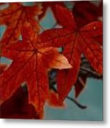 Red Leaves On The Branches In The Autumn Forest. Metal Print