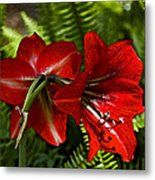 Red Lilies For Spring Metal Print