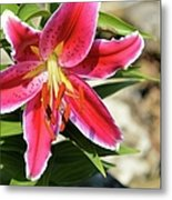 Red Lilly 8095 Metal Print