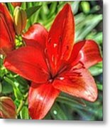 Red Lily 2 Metal Print