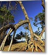 Red Mangrove Aerial Roots Metal Print