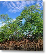 Red Mangrove East Coast Brazil Metal Print by Pete Oxford