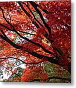 Red Maple 01 Metal Print