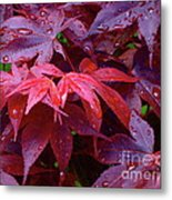 Red Maple After Rain Metal Print