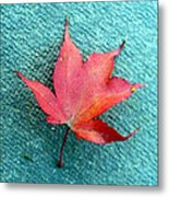 Red Maple Blue Metal Print