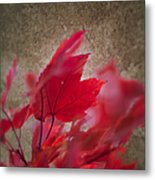 Red Maple Dreams Metal Print