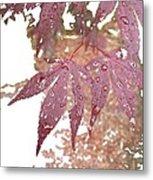 Red Maple Kissed By Water Metal Print