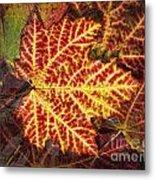 Red Maple Leaf Metal Print
