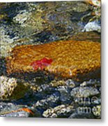Red Maple Leaf In Stream Metal Print