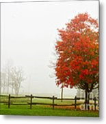 Red Maple Tree And A Split-rail Fence Metal Print