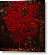 Red Maple Tree Too Metal Print