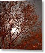 Red Oak At Sunrise Metal Print