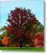 Red Oak In Loose Park Metal Print