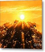 Red Oak Sunrise Fog Metal Print