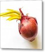 Red Onion With Sprout Metal Print