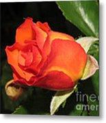 red orange Baby Rose Metal Print