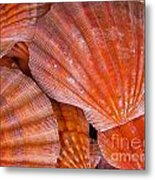 Red Orange Sea Shells Metal Print