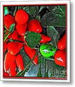 Red Pepper Plant Metal Print