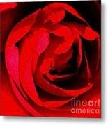 Red Petals Metal Print by Scott Allison