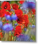 Red Poppies In The Maedow Metal Print