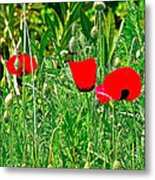 Red Poppies Near Meryem Ana Evi-cottage Believed To Be Mary's Last Home-turkey Metal Print
