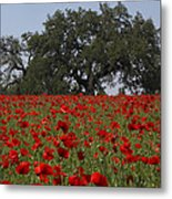 Red Poppy Field Metal Print