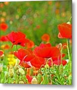 Red Poppy Flowers Meadow Art Prints Metal Print
