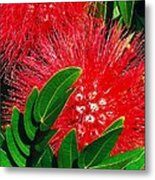 Red Powder Puff Metal Print