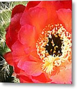 Red Prickly Pear Blossom Metal Print