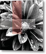 Red Rain Blossom Metal Print