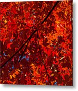 Red Red And Red Metal Print