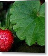 Red Red Berry Metal Print