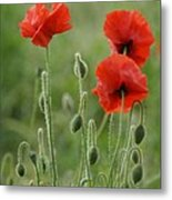 Red Red Poppies 1 Metal Print